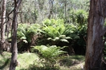 max,jerusalum creek feb'12 081.JPG