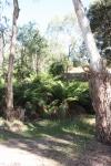 max,jerusalum creek feb'12 026.JPG