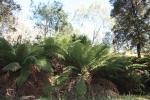 max,jerusalum creek feb'12 023.JPG